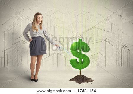 Business woman poring water on dollar tree sign concept on city background