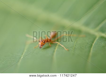 ant on green leaf in nature