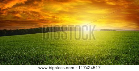 Beautiful sunset on green field