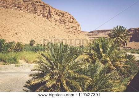 Wide View Of Canyon And Cultivated Fields And Palms In Errachidia Valley Morocco North Africa Africa