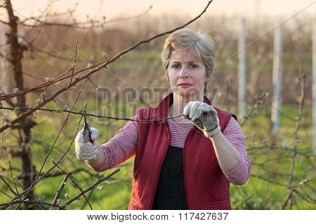 Agriculture, Pruning In Orchard, Adult Woman Working