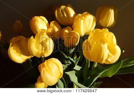 Closeup on yellow tulips