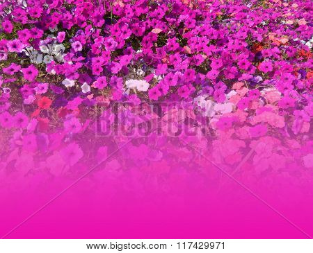 Floral background with copy-space