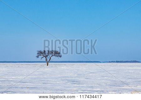 Single Tree In Frozen Prairie