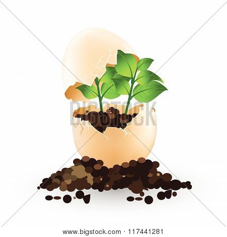 A Little Plant Grows In An Egg Vector