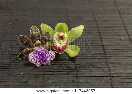 Two orchids on a black background