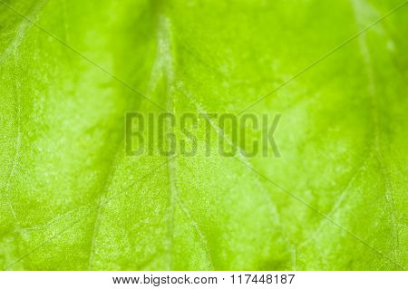Macro Image Of Green Leaf, Small Depth Of Field.