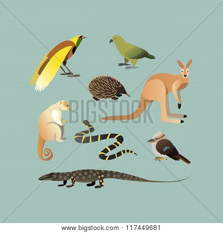 Vector Set Of Different Australian Animals. Animals of Australian Kangaroo Echidna, Couscous, Austra