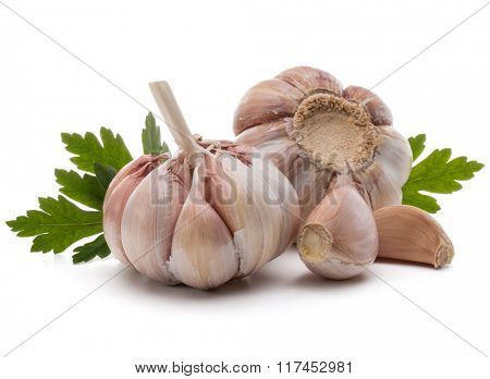 Garlic bulb and parsley herb still life isolated on white background cutout