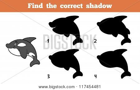 Find The Correct Shadow (killer Whale)