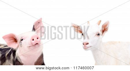 Portrait of funny piglet and goat