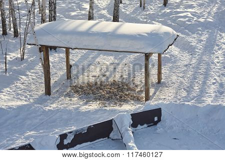 Food for Wild boar in snow Russian forest wild animals footprints wild nature Siberia.