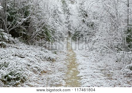 Trees covered with hoarfrost rime ice along the forest path, beautiful winter scene