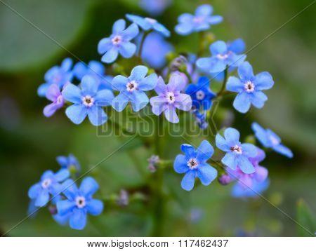 Spring flowers in the garden