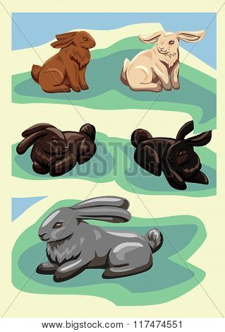 Five different rabbits on the lawn.