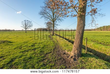 Row Of Almost Leafless Trees On A Sunny Day In Wintertime