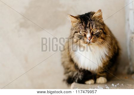 Portrait of cat looking at camera