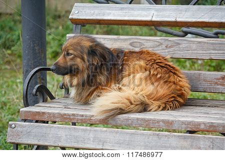 Homeless Dog Lying On Red Bench. Animals