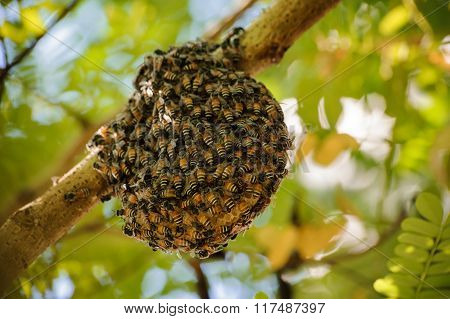Little Wild Hive With Bees