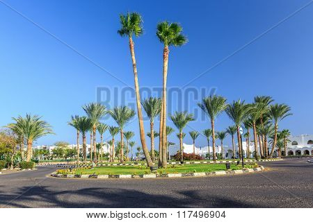 The view to road and palm trees near the hotels