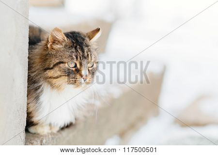 Cat waits for master outdoor