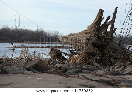 Driftwood on Riverbank