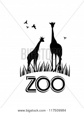 Zoo Information Board