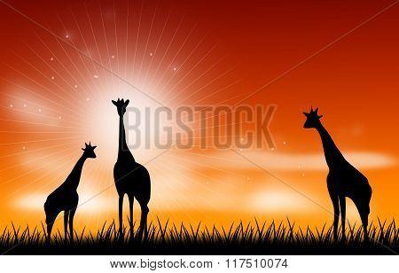 Giraffee Scene Illustration