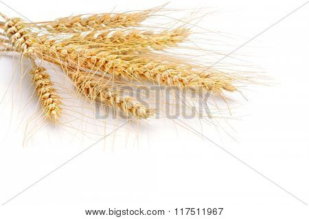 wheat on the white background..