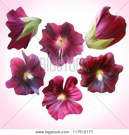 Set Of Purple Mallow Buds