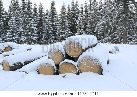 woods under snow on winter meadow