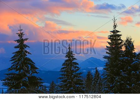 Pine trees on sunset sky background in mountains