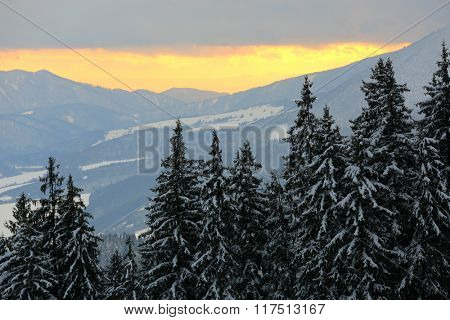 landcape with snowy pines in mountains on sunset sky background