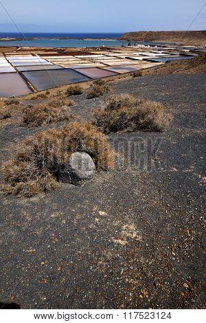 Water Coastline Salt In  Lanzarote Spain
