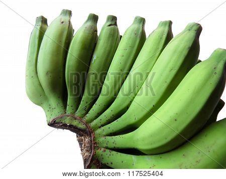 Green Bananas On White