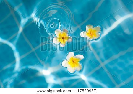 Frangipani Flower On The Blue Water, Concept For Tropical Vacation