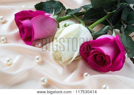 Three Multi-colored Roses