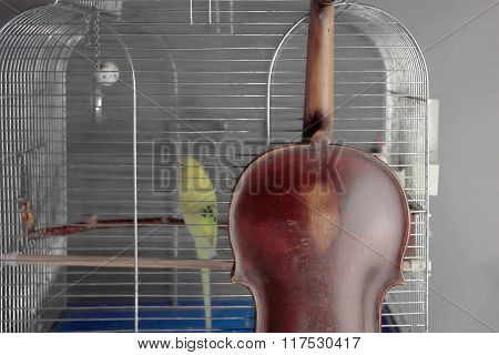Violin And Parrot