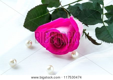 Bright Pink Rose In A Gift