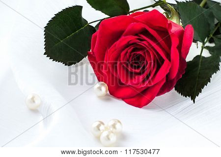 Bright Red Rose In A Gift