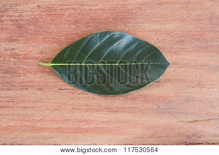 Leaves On Wood  Background