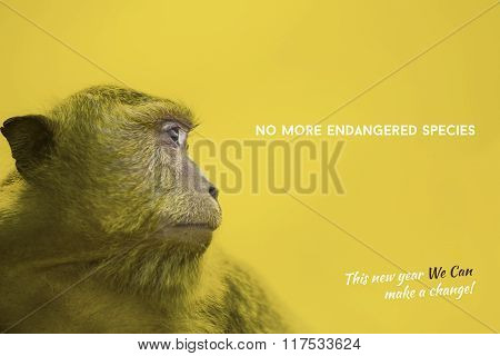 Endangered Species Awareness With Wild Monkey