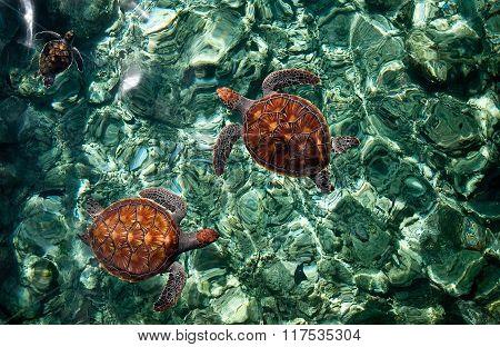 Underwater World. Sea Turtles