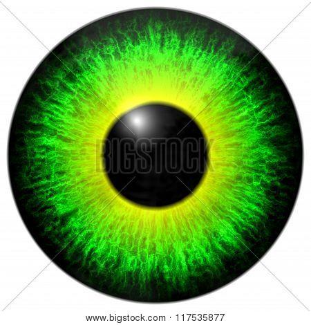 Green Yellow Eye Iris