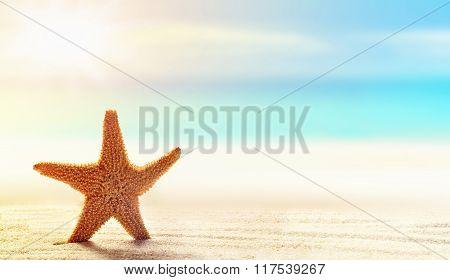 Starfish on white sand beach with ocean
