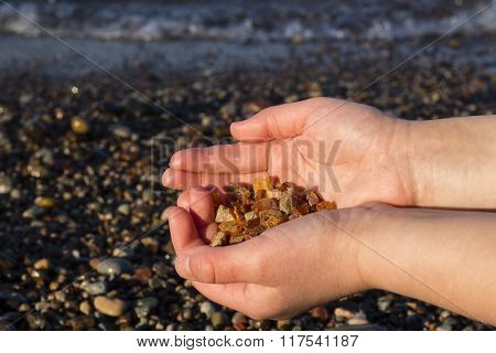 Some pieces of amber found on the Baltic seashore