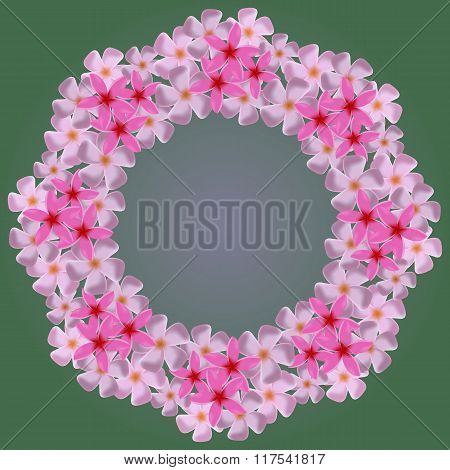 wreath from white plumeria on a green background