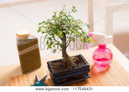 Beautiful bonsai tree, and sprayer scissors