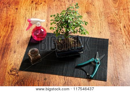 Beautiful bonsai tree, and sprayer scissors on wooden background