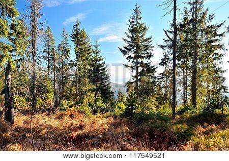 Autumn forest landscape.